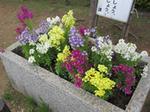 浅草隅田川沿いの花壇